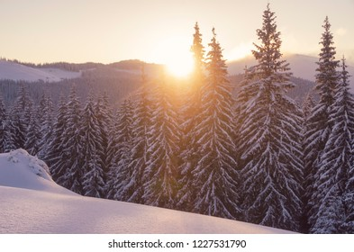 Sunset in the winter forest high in the mountains. Amazing evening backcountry landscape with lots of snow