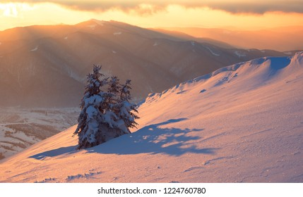 Sunset in winter mountains, Caroathians, Ukraine. National park Synevyr