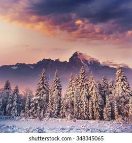 sunset in the winter mountains. Carpathian, Ukraine, Europe.
