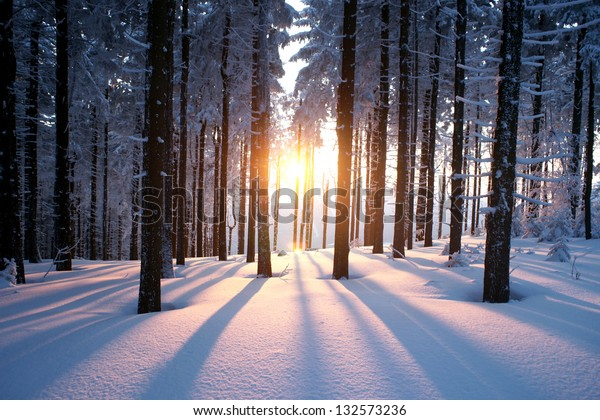 Sunset in the wood between the trees strains in winter period