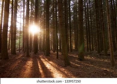 Sunset in the woods in autumn in 'het Spanderswoud' in the Netherlands