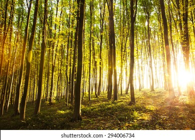 sunset in the woods. nature