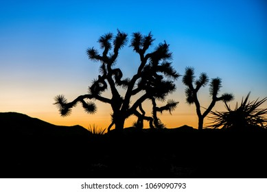Sunsets and sunrises at Joshua Tree National Park in Southern California are some of the most dramatic landscapes . With a bit of cloud cover, the sky erupts in fiery colors.