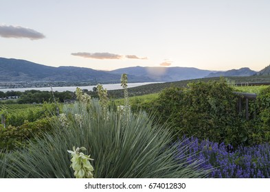 Sunsetting in the Okanagan Valley with Lake Osoyoos and the hills in the background and fkowering yucca and lavender in the foreground.