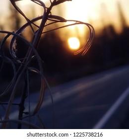 Sunsetting thru spent fireweed
