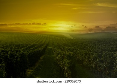 Sunset-Wineyard-Bordeaux Wineyard-France
