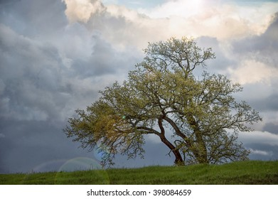 Sunshine after the rain. A lone tree after a heavy storm. Storm clouds and sunshine in the background with lens flare