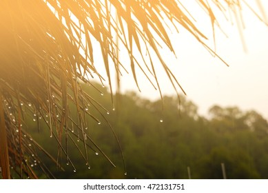 sunshine after raining and rain drop on grass roof and green background