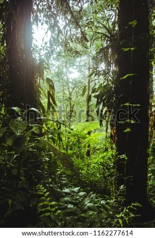Sunshine Breaks Through Dense Greenery Trees Stock Photo