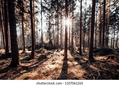 Sunshine in the dense spruce forest
