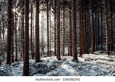 Sunshine in the dreamy winter forest