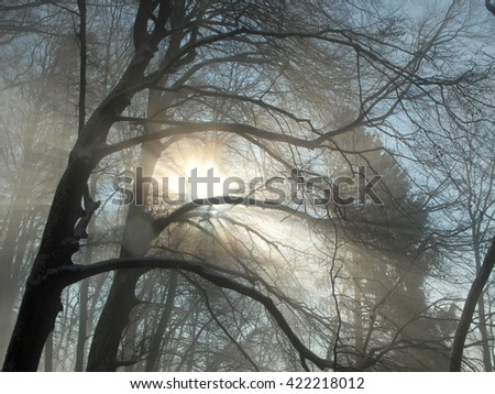 Sunshine and fog in a winter forest