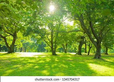 sunshine garden in the morning
