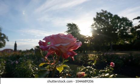 Sunshine garden red flower