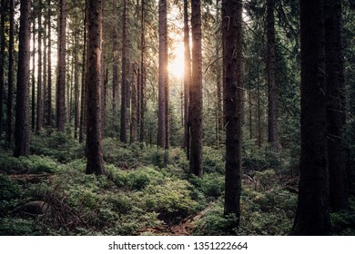 Sunshine on a dark Morning in the forest