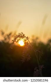 the sunshine on the kaliadem, yogyakarta