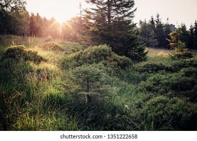 Sunshine on the Moor landscape
