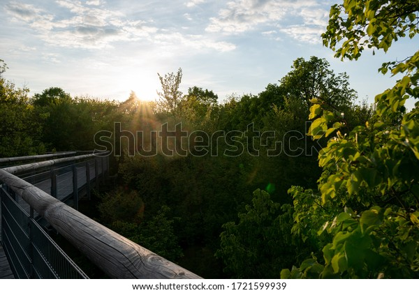 Sunshine on the treetop trail in the Hainich national Park, Thuringia