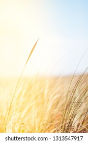 Sunshine over the summer field - beauty in nature, balanced lifestyle, environmental concept. Enjoying the sense of freedom