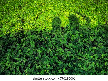 Sunshine with shade or shadow of couple. The couple doing a shape of shadow on green plant.