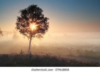 sunshine through tree during misty morning, Noorth Bradant, Netherlands