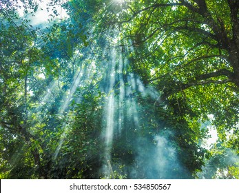 sunshine from tree  in forest. cloud and smoke float pass sunshine