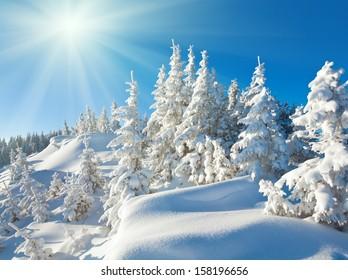 Sunshine under the winter calm mountain landscape with beautiful fir trees  on slope (Kukol Mount, Carpathian Mountains, Ukraine)