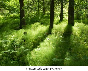 sunshine in the under-storage of a coniferous forest in sweden