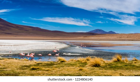 Sunshine view of beautiful flamingos at amazing Colorado lagoon