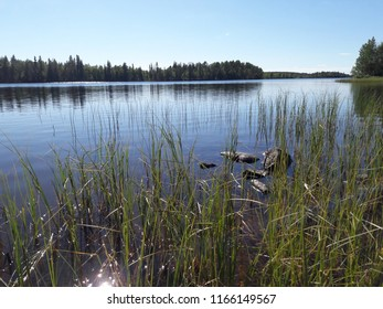 Sunshining restful scene from rocky waterline beach over bed of reeds into blue lake and wild forest shore with bushes and birch trees sunny blue sky summer day in Kuusamo Finland