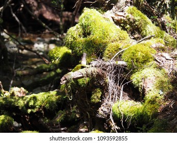 sunspots on mossy forest