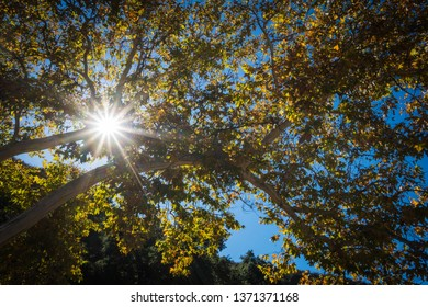 Sunstar light shines through green and golden tree leaves.