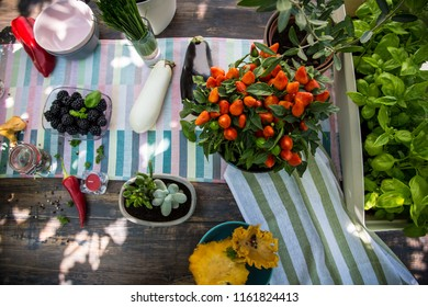 Sunwashed colorful dining table, versatile served for the summer lunch in garden / Enjoying leisure time in nature. Healthy lifestyle concept