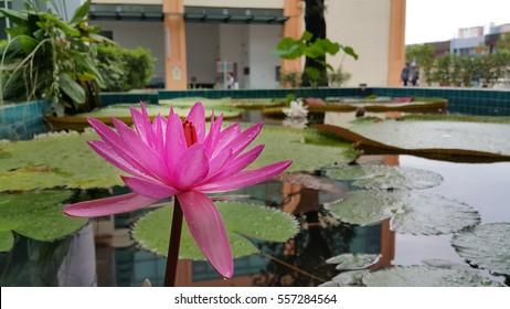 reinaimaging's Portfolio on Shutterstock