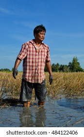 SUPANBURI, THAILAND - OCTOBER 31, 2015: A farmer man standing in his water chestnut field with bright blue sky