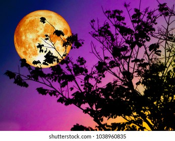 super blood moon back silhouette branch tree sunset, Elements of this image furnished by NASA
