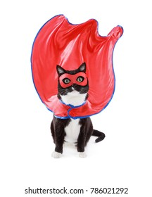 Super hero black and White tuxedo cat wearing mask and cape