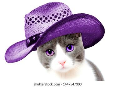 Super lovely funny photo of a cute cat (kitten) isolated. She has purple (mauve) eyes and she wears a purple cowboy hat on her head. She is gray and white and she will make your day. Crazy pets.