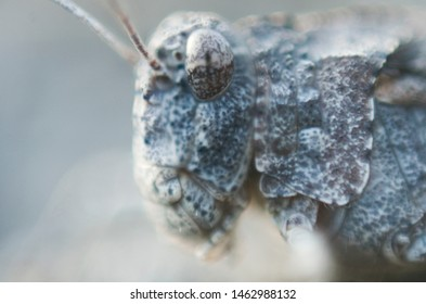 super macro heads katydids like to stone