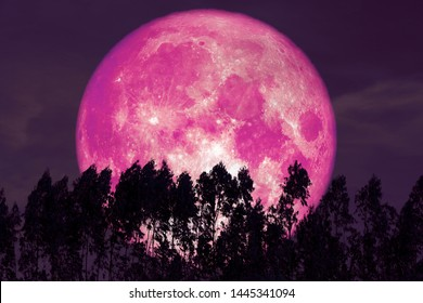 super pink sturgeon moon on red night sky back silhouette pines, Elements of this image furnished by NASA