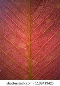 super red leaf texture