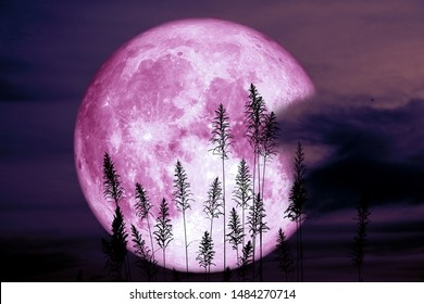 super sturgeon moon on night red sky back silhouette tree, Elements of this image furnished by NASA
