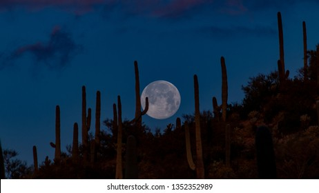 Super worm equinox full moon setting over Saguaro National Park over a hill covered in cactus near dawn. Early morning moonset in the Sonoran Desert with a southwest landscape. Tucson, Arizona. 2019.