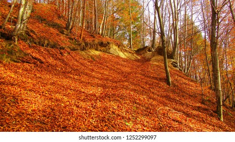 superb orange autumn leafes cover the road in the wood