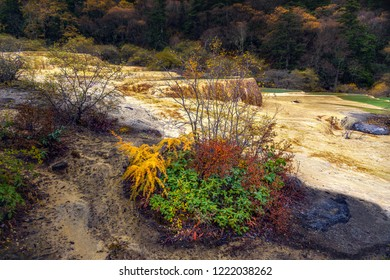 Superb yellow spring in Huanglong National Park near Jiuzhaijou - SiChuan, China