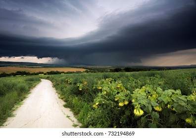 Supercell storm over sunflowers field