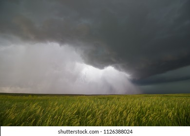 Supercell thunderstorm passes by a wheat field, releasing a torrent of rain and wind.