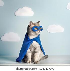 Superhero Cat. Scottish Straight Cat