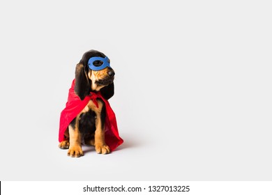 Superhero Dog in Red Cape