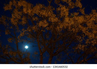 Supermoon of 20/01/19, prior to lunar eclipse